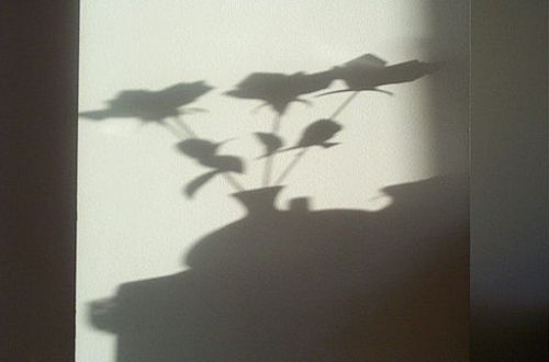 512px-Shadow_2752